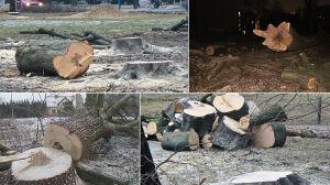 """Miał być """"milion drzew dla Warszawy"""". Ile zostało z miejskiego programu?"""