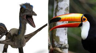 Ptaki dawno temu miały zęby. Naukowcy już wiedzą co się z nimi stało