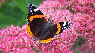 Na Mazurach powstało schronisko dla motyli