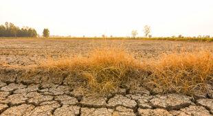 Cała rozmowa z klimatolog Kingą Kuleszą