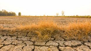 Za pięć lat temperatura może być wyższa o 1,3 stopnia niż w epoce przedindustrialnej
