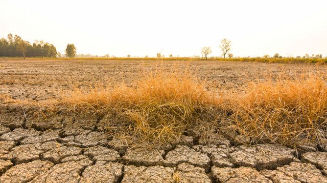 """""""Zimy praktycznie nie będzie, latem fale upałów z powyżej 40 stopniami w cieniu"""""""
