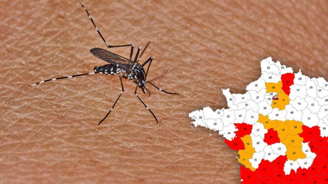 Plaga komarów tygrysich. Ukąszenie może być niebezpieczne